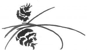 Horn Cove Logo 4 300x171